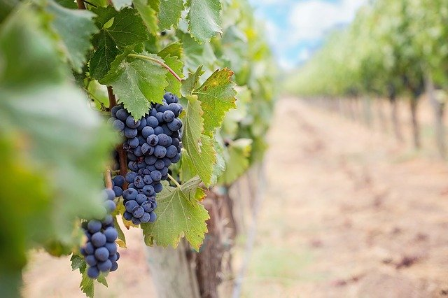important tips to increase your wine knowledge - Important Tips To Increase Your Wine Knowledge