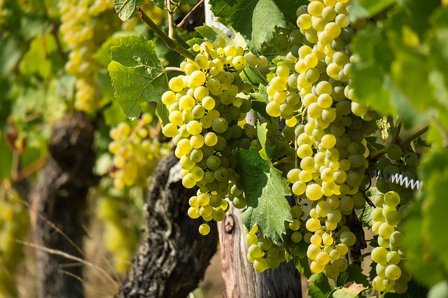 read these wine pointers to boost your knowledge - Read These Wine Pointers To Boost Your Knowledge