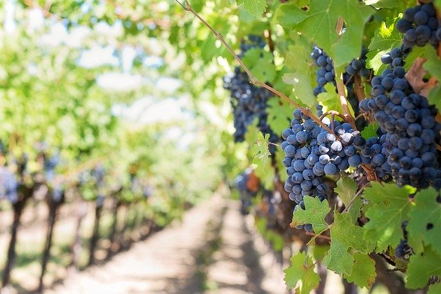 use this advice to improve your wine knowledge - Use This Advice To Improve Your Wine Knowledge