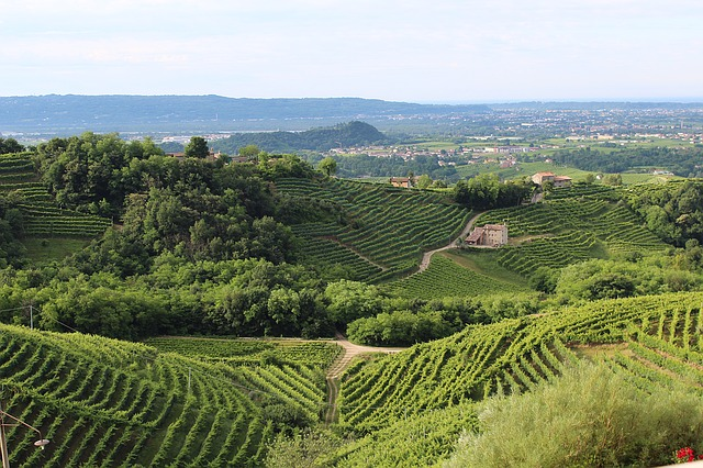 how to find and enjoy great wines - How To Find And Enjoy Great Wines