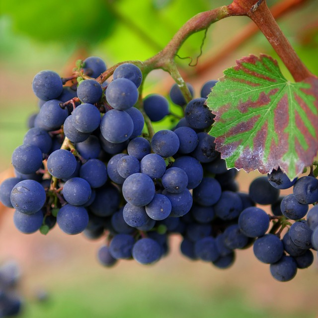 become a master of wine with these tips - Become A Master Of Wine With These Tips