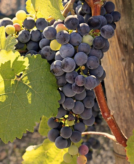 excellent article about wine that is simple to follow along - Excellent Article About Wine That Is Simple To Follow Along