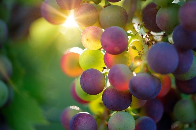 love wine this article can help you - Love Wine? This Article Can Help You!