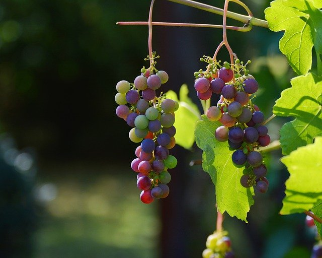 below is the best place for special tips about wine - Below Is The Best Place For Special Tips About Wine